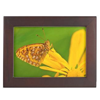 USA, Colorado. Skipper butterfly on sunflower Keepsake Box