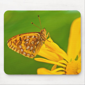 USA, Colorado. Skipper butterfly on sunflower Mouse Mat
