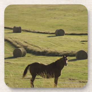 USA, Colorado, Steamboat Springs, hay rolls and Drink Coaster