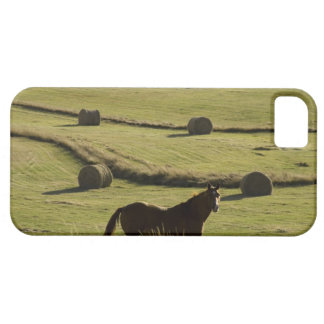 USA, Colorado, Steamboat Springs, hay rolls and iPhone 5 Cases