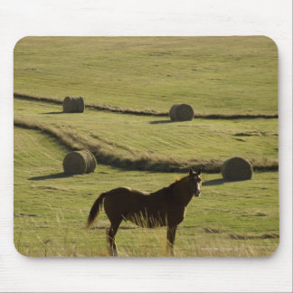USA, Colorado, Steamboat Springs, hay rolls and Mouse Mat