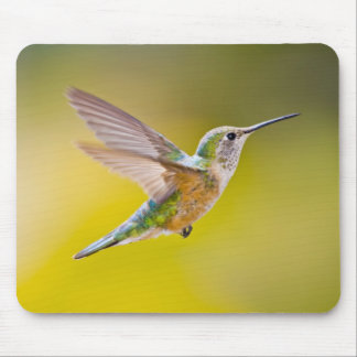 USA, Colorado, Summit County, Heeney. Side view Mouse Pad