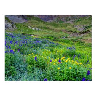 USA, Colorado. Sunrise On Wildflowers Postcard