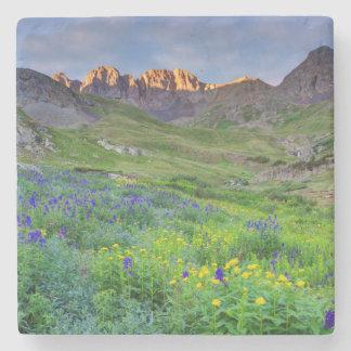 USA, Colorado. Sunrise On Wildflowers Stone Coaster
