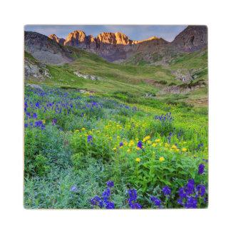USA, Colorado. Sunrise On Wildflowers Wood Coaster