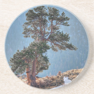 USA, Colorado, Tree In Estes Park Coaster