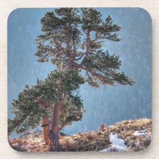 USA, Colorado, Tree In Estes Park Beverage Coasters