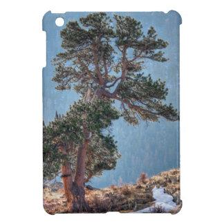 USA, Colorado, Tree In Estes Park iPad Mini Cases