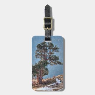 USA, Colorado, Tree In Estes Park Luggage Tag