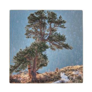 USA, Colorado, Tree In Estes Park Maple Wood Coaster