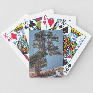 USA, Colorado, Tree In Estes Park Bicycle Poker Deck