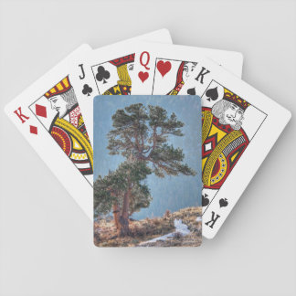 USA, Colorado, Tree In Estes Park Playing Cards