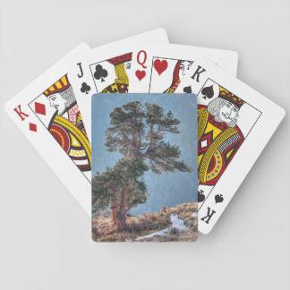 USA, Colorado, Tree In Estes Park Poker Deck