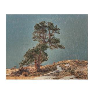 USA, Colorado, Tree In Estes Park Wood Print