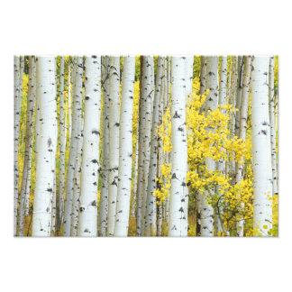 USA Colorado White River National Forest Photo Art