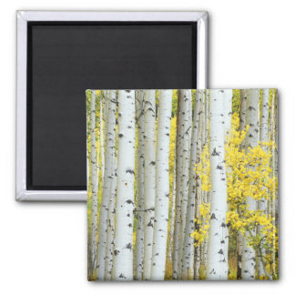 USA, Colorado, White River National Forest, Square Magnet