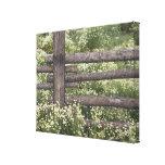 USA, Colorado, Wild Chamomile around log fence Canvas Print