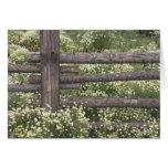 USA, Colorado, Wild Chamomile around log fence Greeting Card
