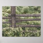 USA, Colorado, Wild Chamomile around log fence Poster