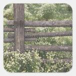 USA, Colorado, Wild Chamomile around log fence Square Stickers