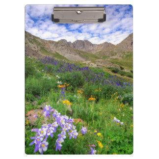 USA, Colorado. Wildflowers In American Basin Clipboard