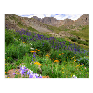 USA, Colorado. Wildflowers In American Basin Postcard