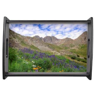 USA, Colorado. Wildflowers In American Basin Serving Tray