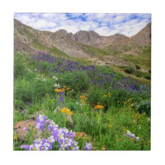 USA, Colorado. Wildflowers In American Basin Small Square Tile