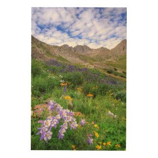 USA, Colorado. Wildflowers In American Basin Wood Wall Decor