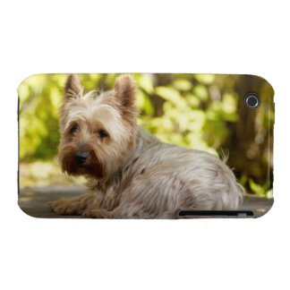 USA, Colorado, Yorkshire terrier lying down and iPhone 3 Cases