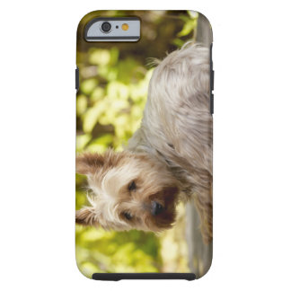 USA, Colorado, Yorkshire terrier lying down and Tough iPhone 6 Case