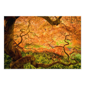 USA, Delaware, Wilmington. Japanese maple Photo Print