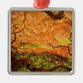 USA, Delaware, Wilmington. Japanese maple Silver-Colored Square Decoration