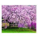 USA, Delaware, Wilmington. Wooden bench under Photo Print