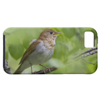 USA, Ellensburg, Washington. Male Veery singing iPhone 5 Cover