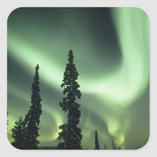 USA, Fairbanks area, Central Alaska, Aurora 2 Square Sticker