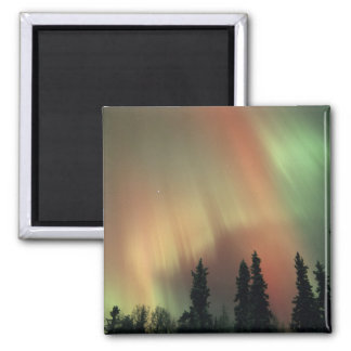 USA, Fairbanks area, Central Alaska, Aurora 3 Square Magnet