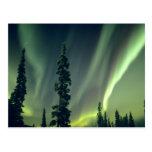 USA, Fairbanks area, Central Alaska, Aurora Post Cards
