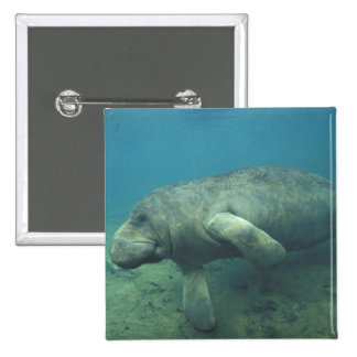 USA, FL, Manatee 15 Cm Square Badge
