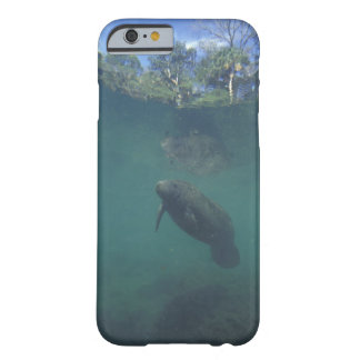 USA, FL, Manatee Barely There iPhone 6 Case