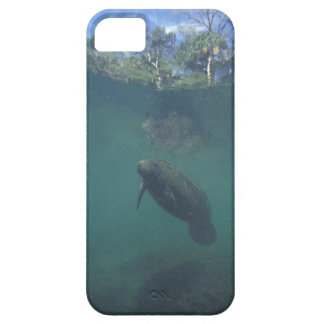 USA, FL, Manatee iPhone 5 Covers