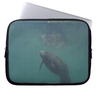 USA, FL, Manatee Laptop Sleeve