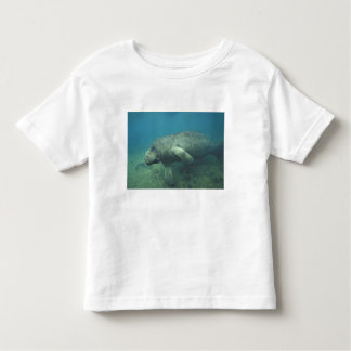 USA, FL, Manatee Toddler T-Shirt