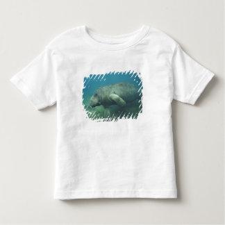 USA, FL, Manatee Toddler T-Shirt