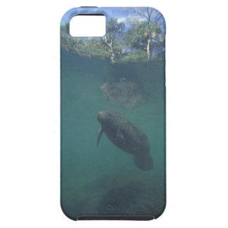 USA, FL, Manatee Tough iPhone 5 Case