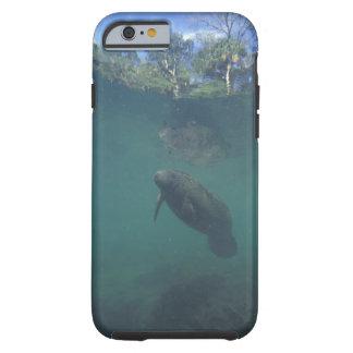 USA, FL, Manatee Tough iPhone 6 Case