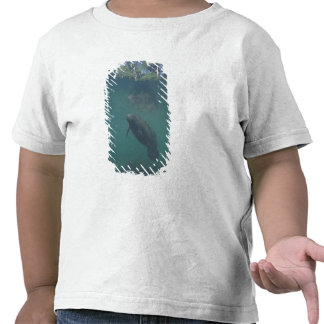 USA, FL, Manatee T Shirt