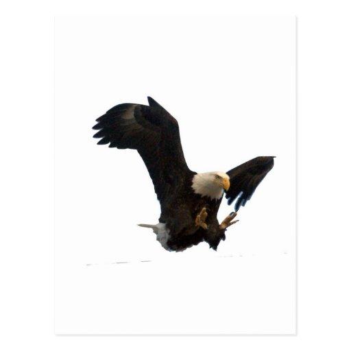 USA FLAG EAGLE POSTCARDS