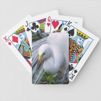 USA, Florida, Anastasia Island, Alligator Farm Bicycle Playing Cards