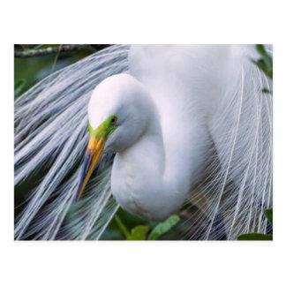 USA, Florida, Anastasia Island, Alligator Farm Postcard